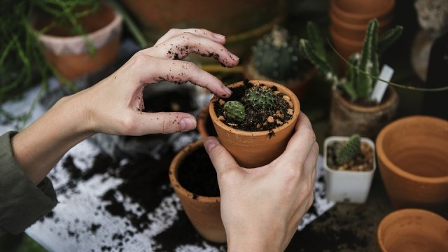 Ilustrasi tanaman