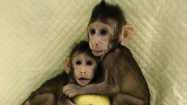 Monyet kembar Zhong Zhong dan Hua Hua