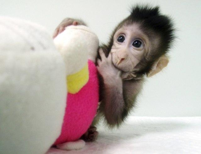 Monyet Zhong Zhong