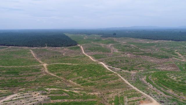 Perkebunan Kelapa Sawit Asian Agri