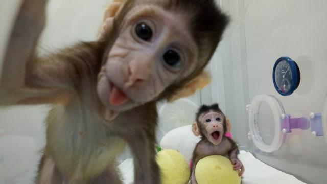 Monyet Zhong Zhong dan Hua Hua