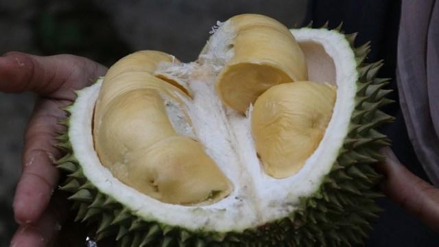 Makan Durian Dapat Atasi Kemandulan, Mitos atau Fakta? (28256)