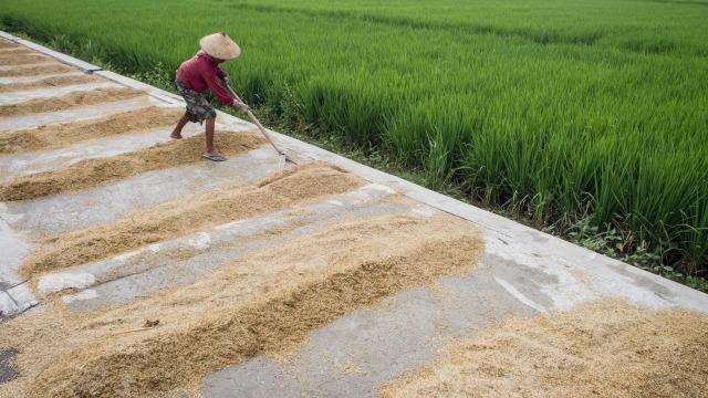 3 Petani Sukses Indonesia yang Menginspirasi Banyak Orang (410789)