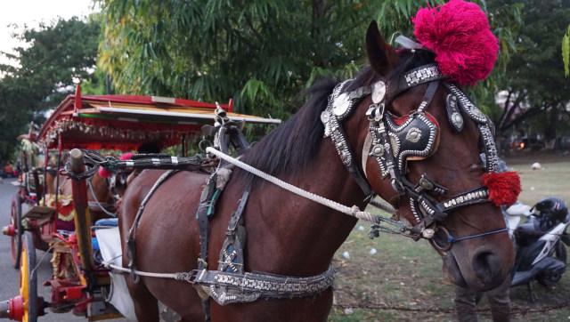 Usai Insiden Kuda Terjatuh, Dishub DIY Tetap Izinkan Andong Beroperasi (40601)