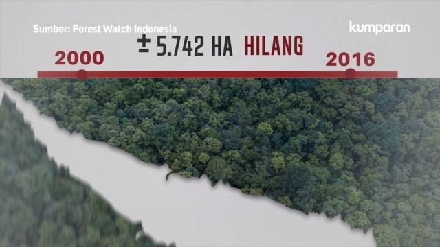 Deforestasi di Kawasan Puncak