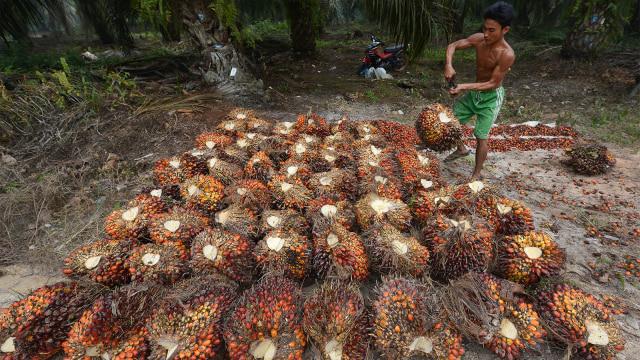 Harga Minyak Sawit Tahun Depan Diprediksi Naik ke USD 650 per Ton (1137661)