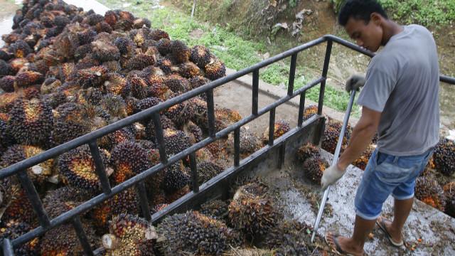 Pekerja memuat kelapa sawit ke dalam truk
