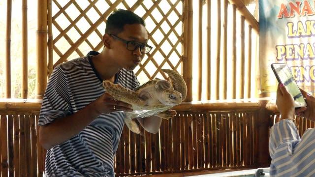 Wisata Berbasis Konservasi Penyu di Pantai Cemara Banyuwangi (868878)