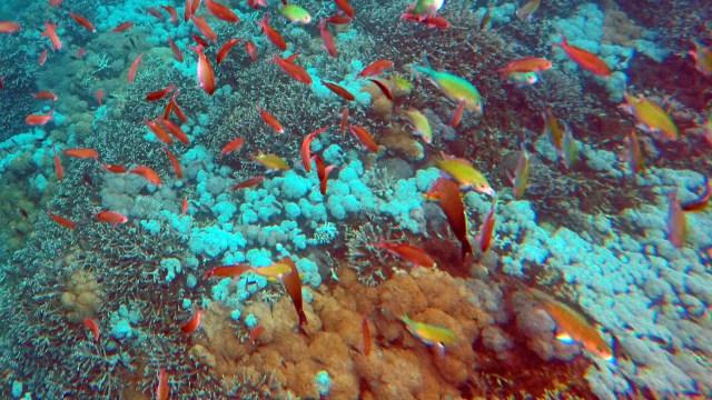 Kondisi terumbu karang di Mangrove Point, Bali