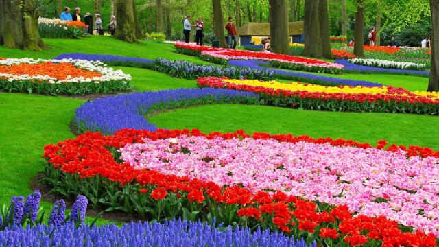 100+ Gambar Taman Bunga Tulip HD