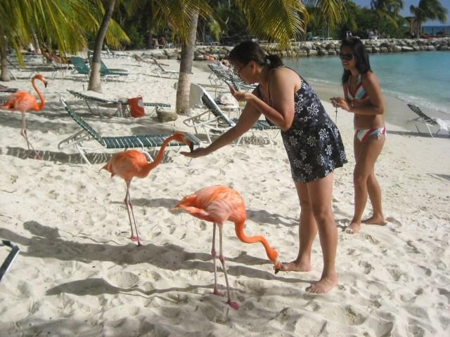 Pantai Flamingo di Aruba (NTCV)