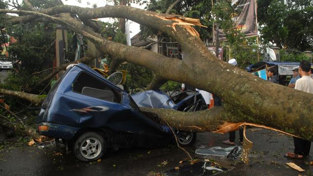 Kabar Baik! Mobil Tertimpa Pohon Tumbang, Bisa Diklaim ke Asuransi (853627)