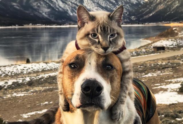 12++ Anjing dan kucing png terbaru