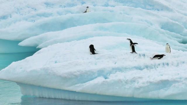 Polusi Plastik Kini Sudah Mencemari Kutub Selatan (28646)