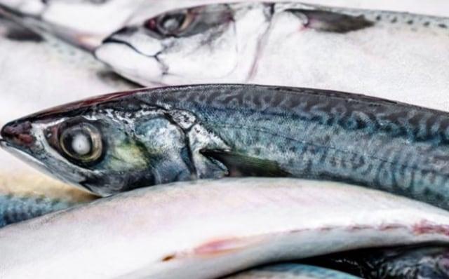 DNA Ikan Salmon Mirip Manusia, dan Krisdayanti...  (12738)
