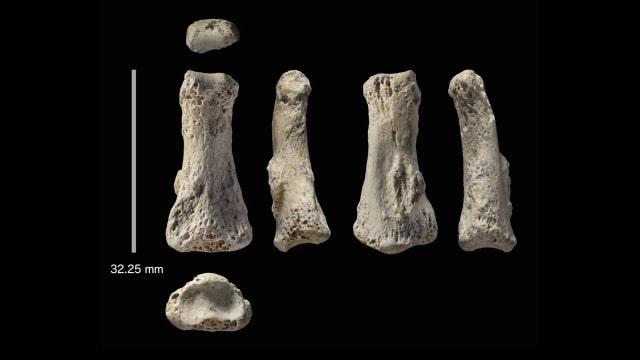 Fosil Jari Manusia di Arab Saudi