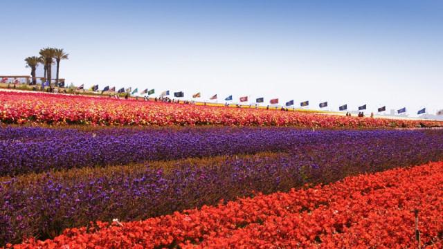 Carlsbad Flowers Field