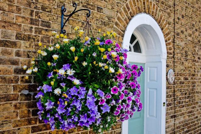 10 Jenis Bunga Hias Gantung Ini Bisa Ceriakan Suasana Rumah! (52474)