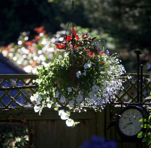 10 Jenis Bunga Hias Gantung Ini Bisa Ceriakan Suasana Rumah! (52482)