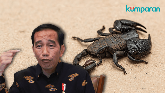 Jokowi sebut racun kalajengking mahal
