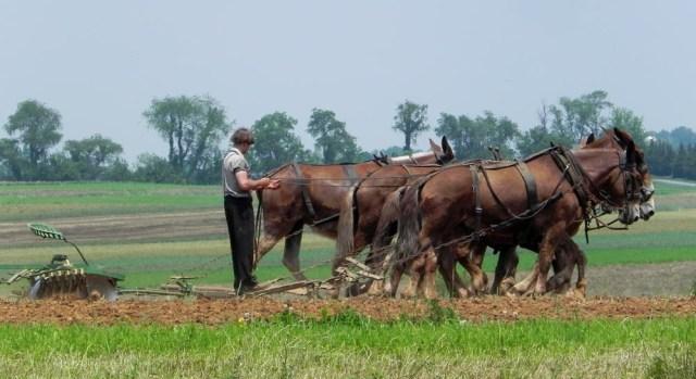 Kesederhanaan Komunitas Amish di Tengah Modernnya Amerika (59537)