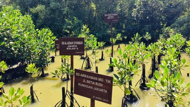 7 Fasilitas yang Bisa Dinikmati di Taman Wisata Alam Angke Kapuk (61207)