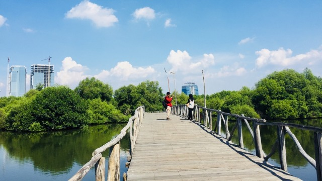 Menikmati Kicauan Burung di Tengah Kesejukan Hutan Mangrove, Jakarta (97130)
