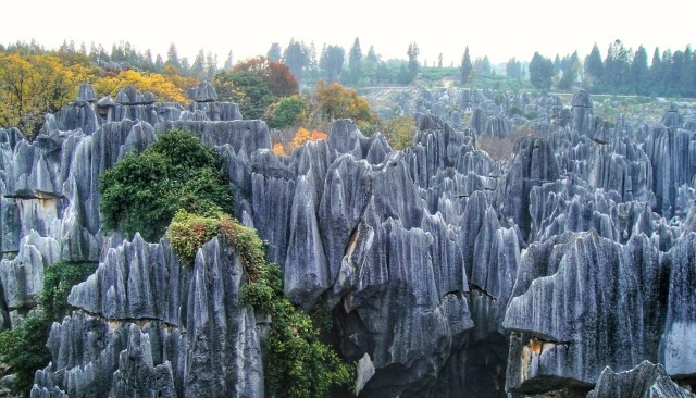 Stone Forest Park