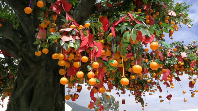 Jeruk mandarin dan Lam Tsuen Wishing Tree