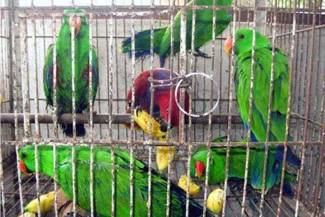 Penyelundupan Ratusan Burung Nuri dari Malang Digagalkan di Bandara Soetta (112459)