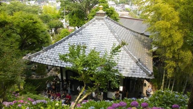 Hydrangea di kuil Hase-dera