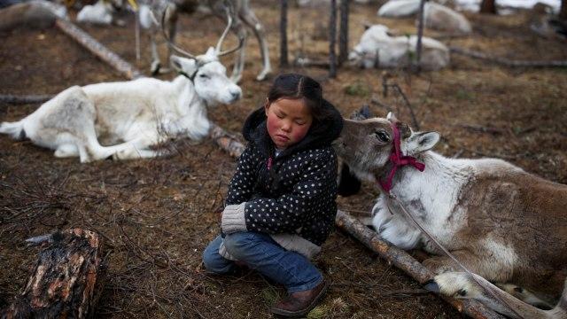 Mengenal Dukha, Suku Penggembala Rusa Kutub Terakhir di Bumi (367318)