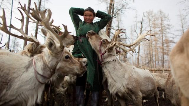 Mengenal Dukha, Suku Penggembala Rusa Kutub Terakhir di Bumi (367316)
