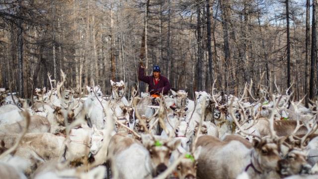 Mengenal Dukha, Suku Penggembala Rusa Kutub Terakhir di Bumi (367311)