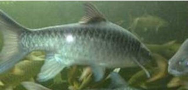 Download 6300 Koleksi Gambar Ikan Garing HD Gratis