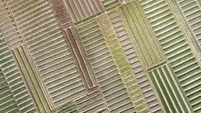 Big Data Jadi Kendala Pengembangan Digital Farming di Indonesia (109330)