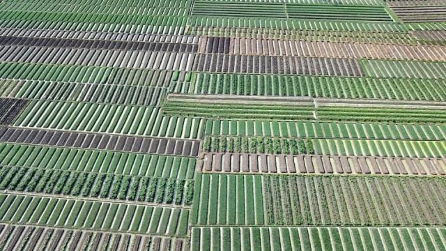 Digital Farming: Memanfaatkan Teknologi untuk Hasil Pertanian yang Maksimal (116407)