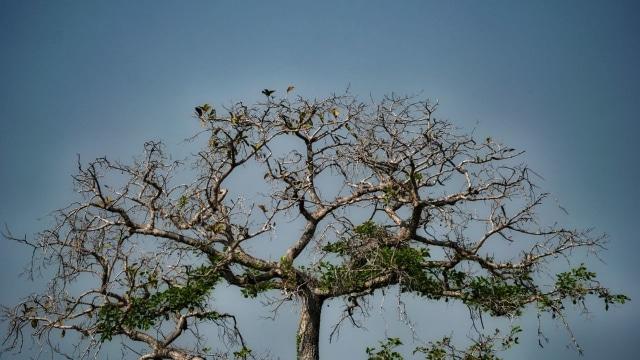 Ilustrasi pohon