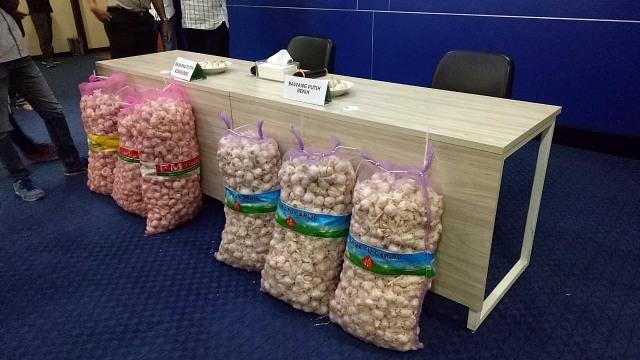 Rilis penjualan bawang putih benih