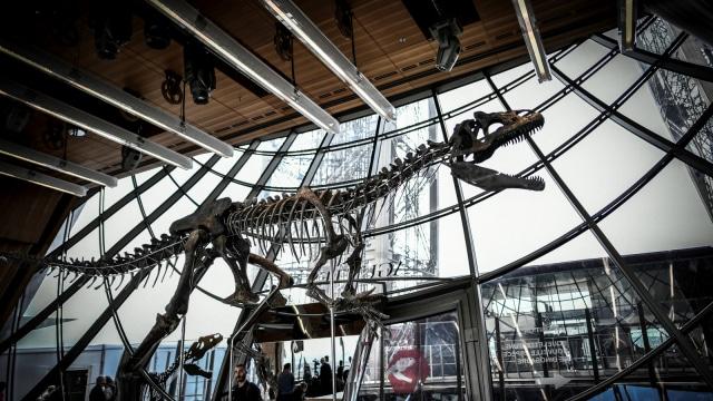 Kerangka Dinosaurus Langka Terjual Lebih dari Rp 32 Miliar di Paris (437413)