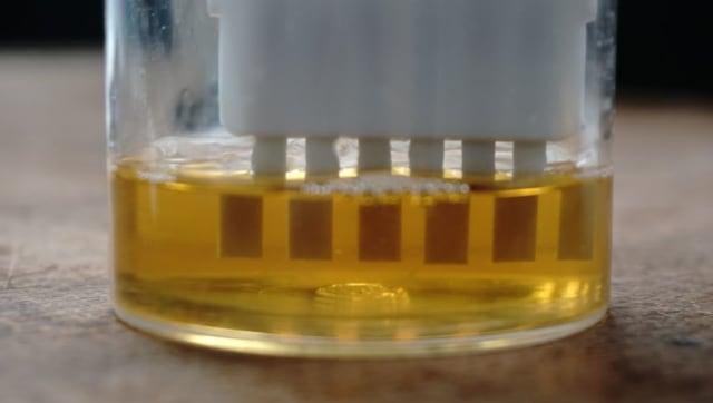 Pemeriksaan urine pengemudi dan kelayakan bus
