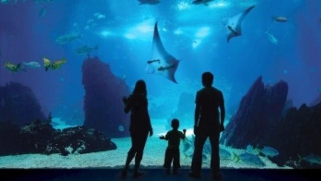 S.E.A Aquarium, Singapura