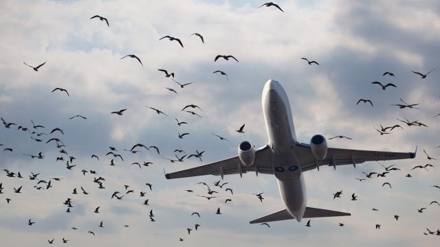 Pesawat dan burung di udara