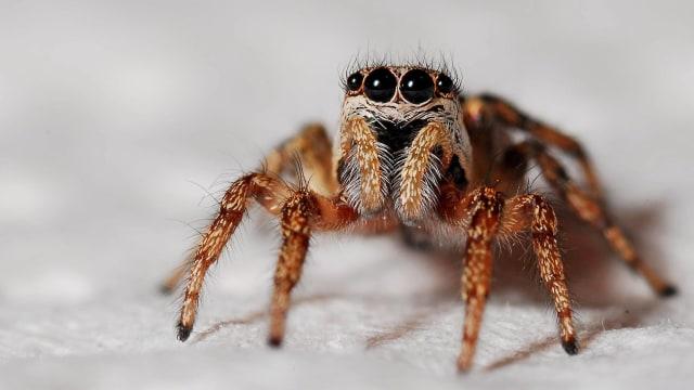Ini Alasan Kenapa Kamu Tidak Boleh Bunuh Laba-laba di Rumah  (127442)