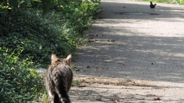 Menerka Jumlah Kucing di Jakarta hingga Tahun 2021 (208041)