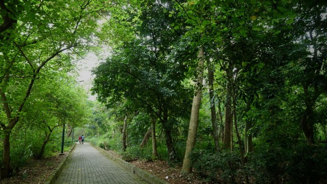 Prabowo: 82 Persen Hutan RI Dikuasai Korporasi (105)