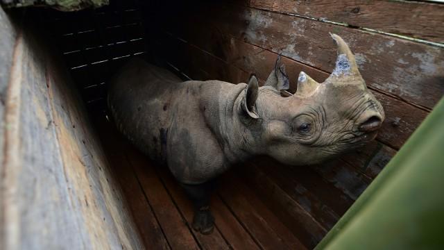 Daftar Hewan yang Terancam dan Sudah Punah di 2018 (148309)