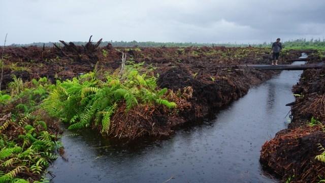 Hutan Gambut Rawa Tripa di Aceh Alami Kerusakan Terparah Selama 2018 (80663)