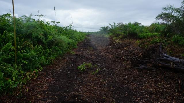 Hutan Gambut Rawa Tripa di Aceh Alami Kerusakan Terparah Selama 2018 (80664)