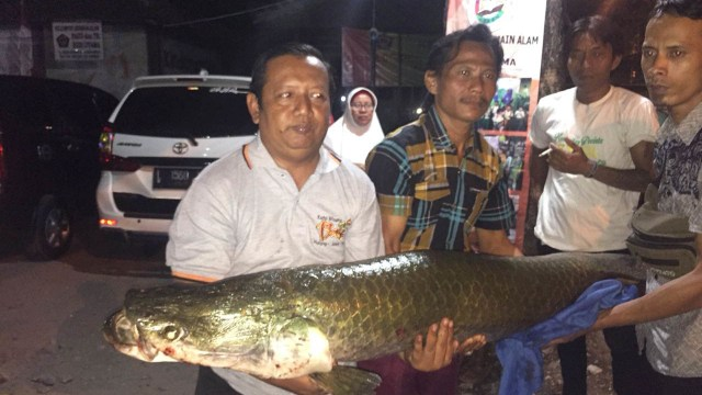 Sudah 18 Ekor Ikan Arapaima Ditemukan di Sungai Brantas, Surabaya (94965)